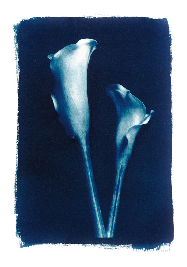 Public Demand – Cyanotype Workshop is back